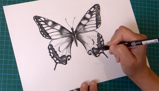 how-to-draw-a-butterfly