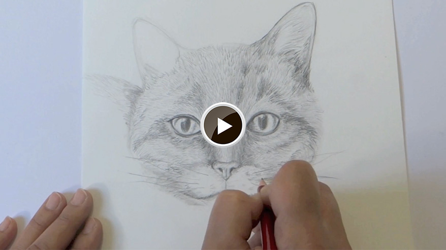 Comment dessiner un chat facilement